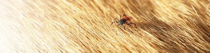 Natürlicher Parasitenschutz